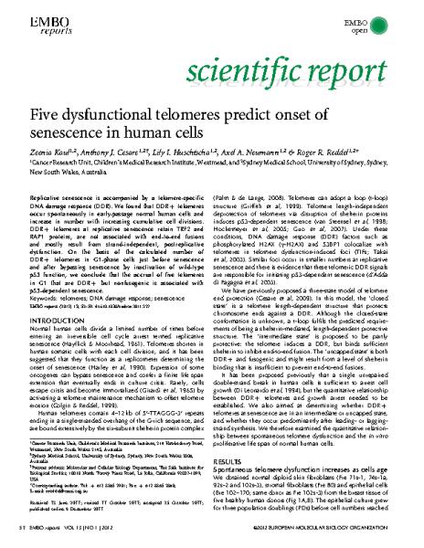 Five_dysfunctional_telomeres_predict_senescence_ReddelRR_EMBO_2011