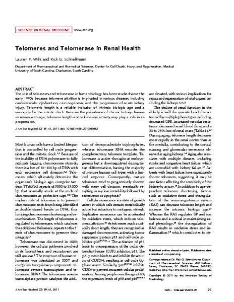 Telomeres_and_Telomerase_in_Renal_Health_SchnellmanDG_JAmSocNephrol_2011